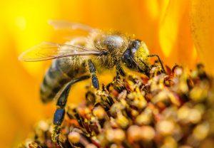 retete polen
