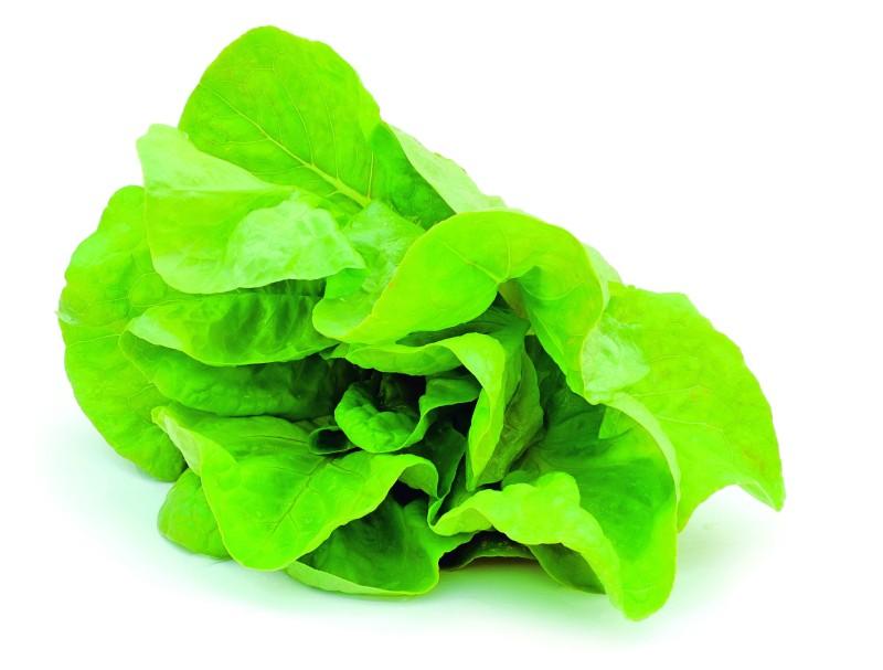 52_salata_verde_shutterstock_81158761.jpg