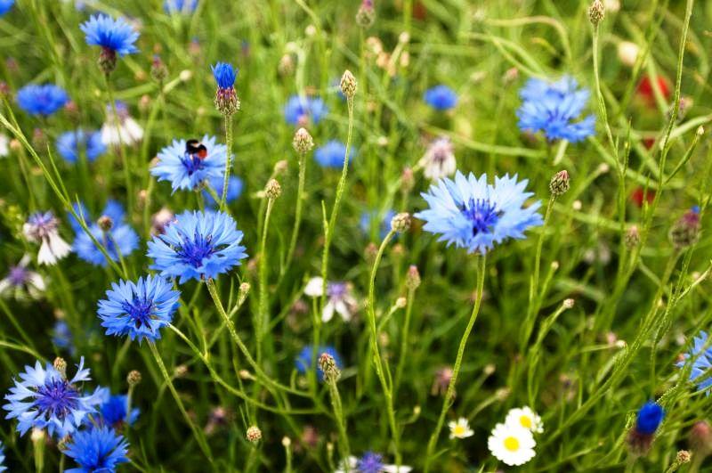 albastrele.jpg